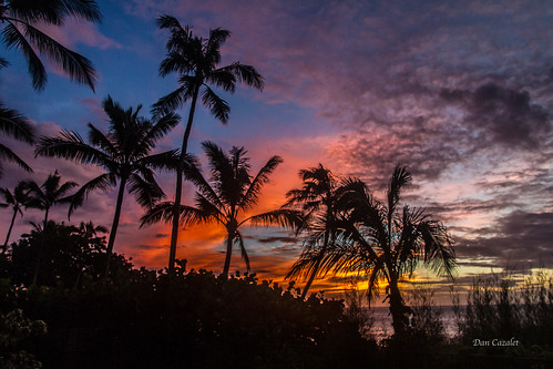 ocean blue trees sunset red sea orange sun water leaves yellow hawaii evening us purple unitedstates pacific sunny palm palmtrees sunsetbeach haleiwa banzai ehukai banzaipipeline ehukaibeachpark leeward canon7d