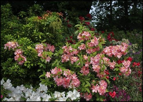 (41) Festival International des Jardins de Chaumont-sur-Loire 2011 22394806192_d2981d4e57