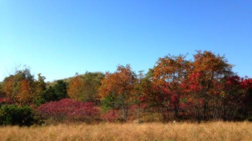 365 photo cellphone color autmn trees project landscape suffolk county