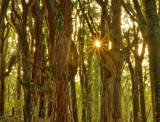 Kalae Forest Sun Glint