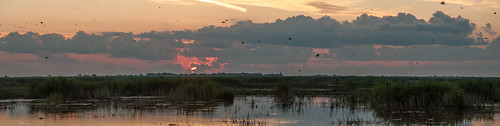 landscapes texas panoramas sunrises sunrisesandsunsets anahuacnwr nationalwildliferefuges