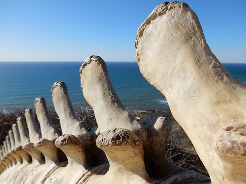 San Diego - Cabrillo NM - walvis skelet