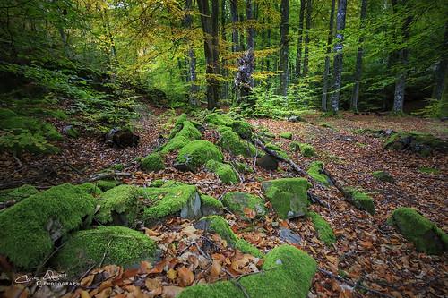 landscape nature beech leafs rocks green colours sweden halleberg