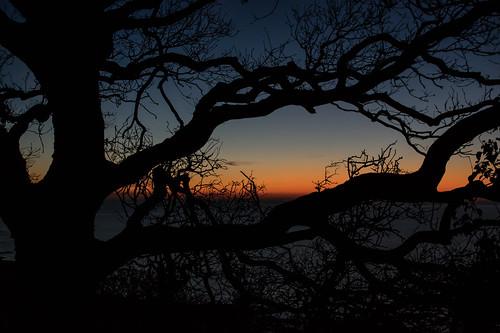 silhouette daybreak dawn presunrise branches hastingscountrypark ecclesbourneglen sky