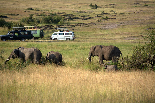 Masai Mara 102