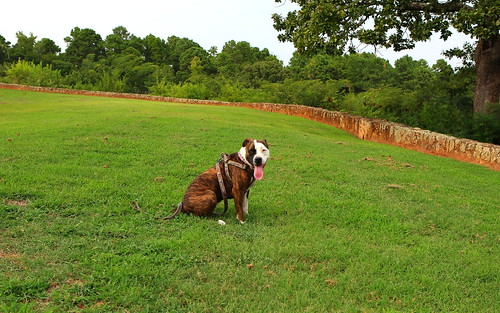 park dog baby dof with view tx lookout greenery jacksonville loves lush brandidawg