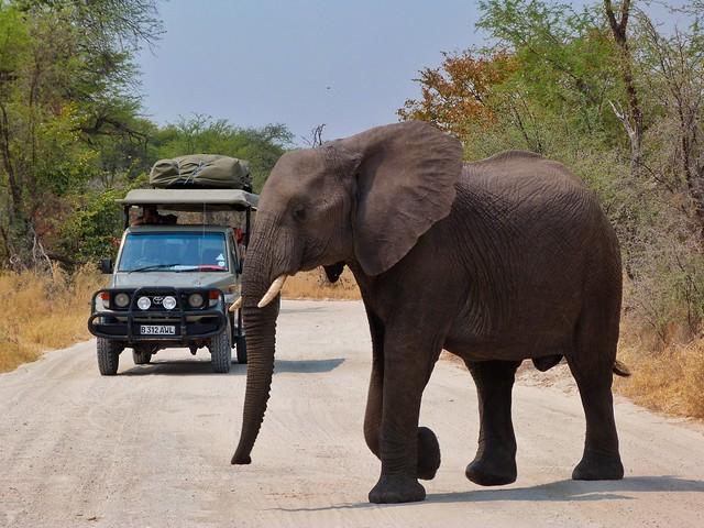 Elefante cruzando la carretera en Botswana