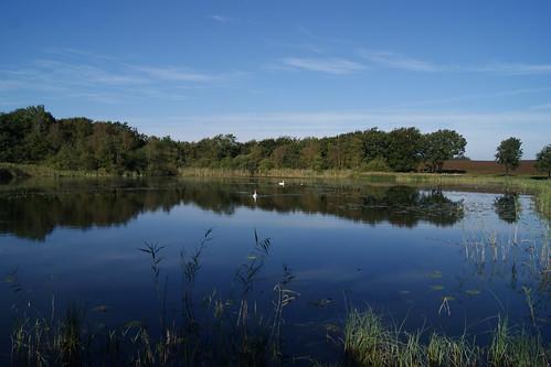 blue autumn lake fall museum swan sunny hede sø efterår svane hjerlhede