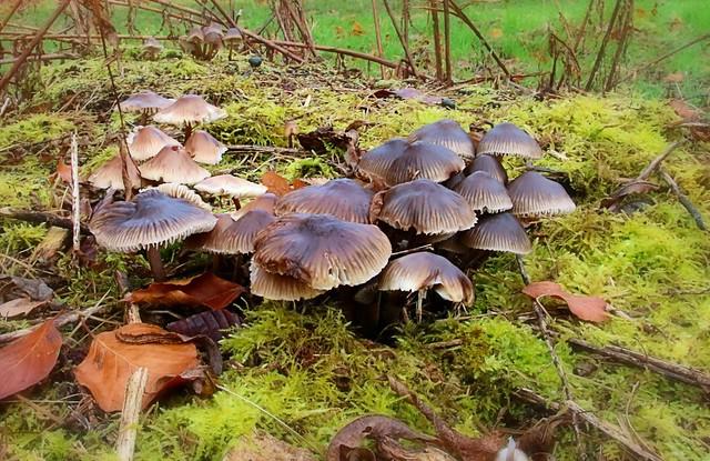 Fungi,Yorkshire Arboretum