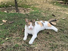 #cat #cats #TagsForLikes.com #catsagram #catstagram #instagood #kitten #kitty #kittens #pet #pets #animal #animals #petstagram #petsagram #photooftheday #catsofinstagram #ilovemycat #instagramcats #nature #catoftheday #lovecats #furry #sleeping #lovekitte