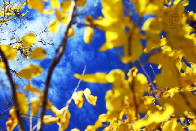 Blue And Yellow Bokeh