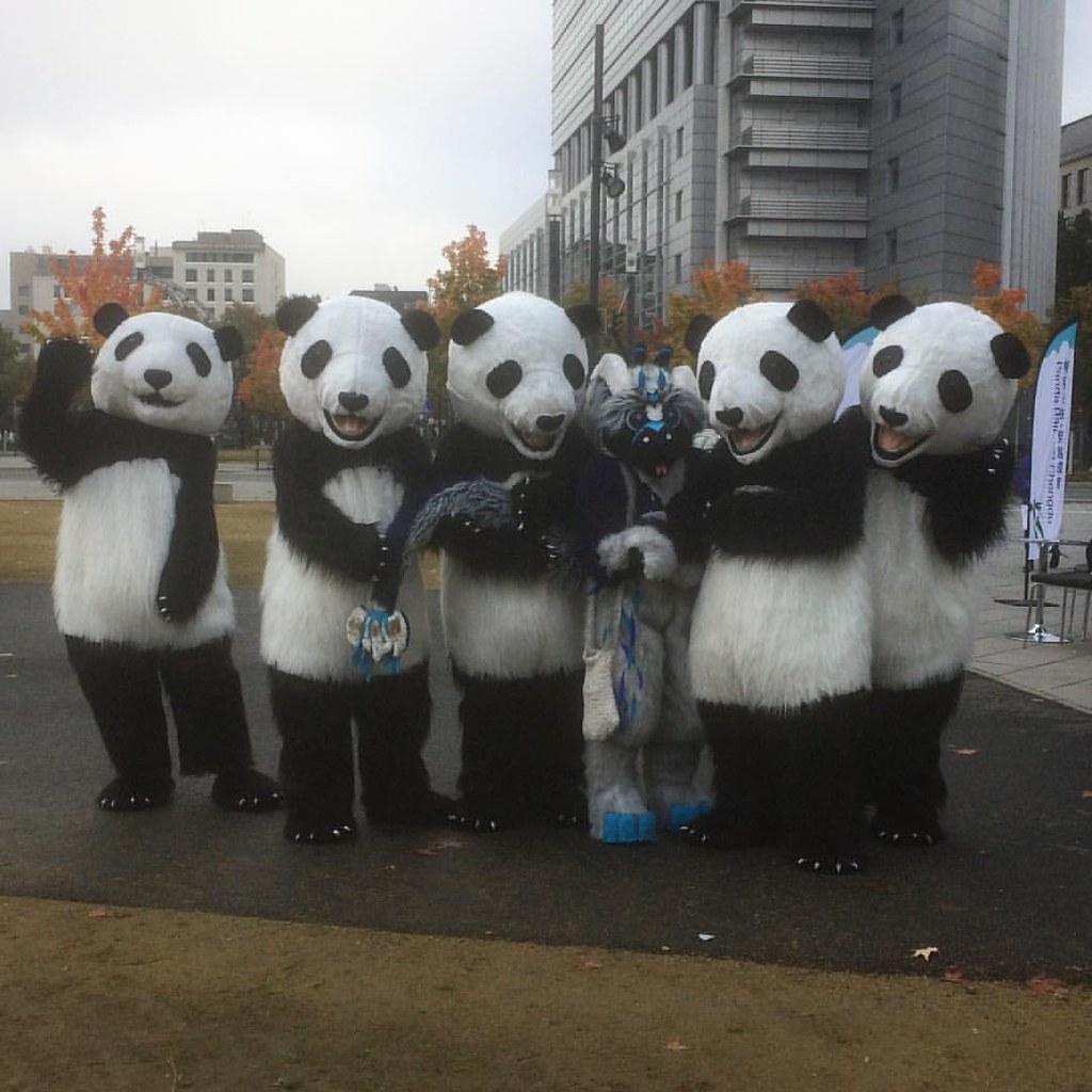 Fursuit Panda help o.o #fbm2016 #fbm16 #cosplay #conventions #dragon #cu