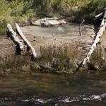 Bubbling pool along Gibbon River