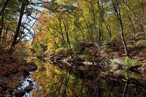 nyc newyorkcity autumn bronx botanicalgardens nybg autumncolor newyorkbotanicalgarden nycparks bronxriver nybgforest