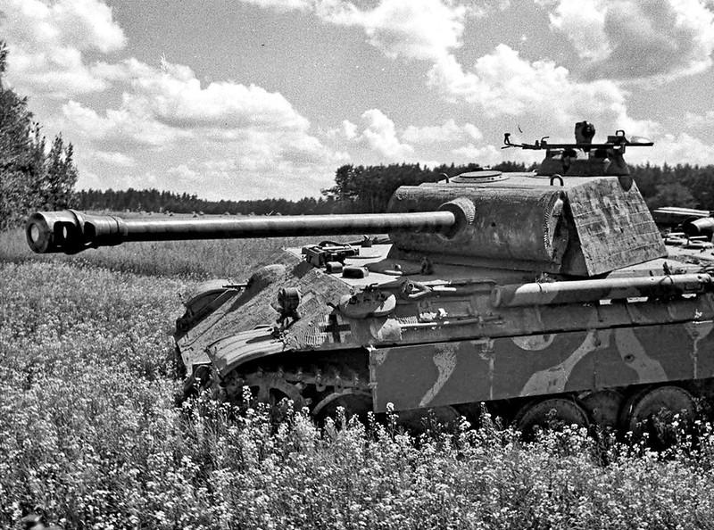 黑豹'534'