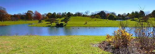 usa colour art beautiful photo illinois nikon colours arty artistic creative ducks colourful nikkor 28300mm chicagobotanicgarden d610 landscapeview japaneseisland paultrottier