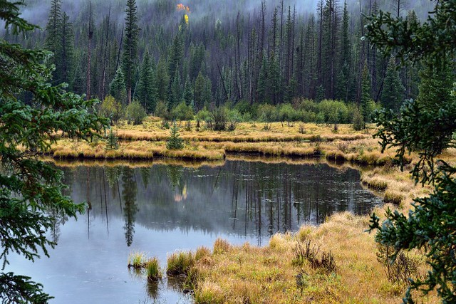 A Pond Setting in Rocky Mountain National Park