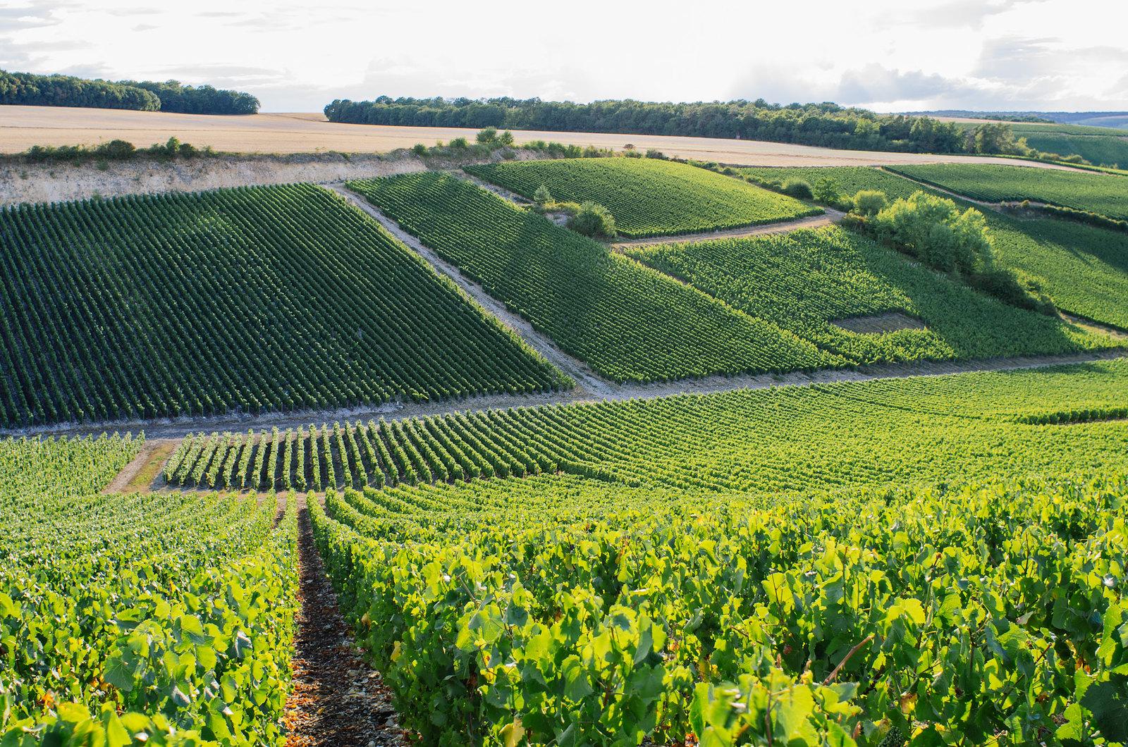 À l'abbaye de Clairvaux, tourisme carcéral - Les vignes de l'Aube