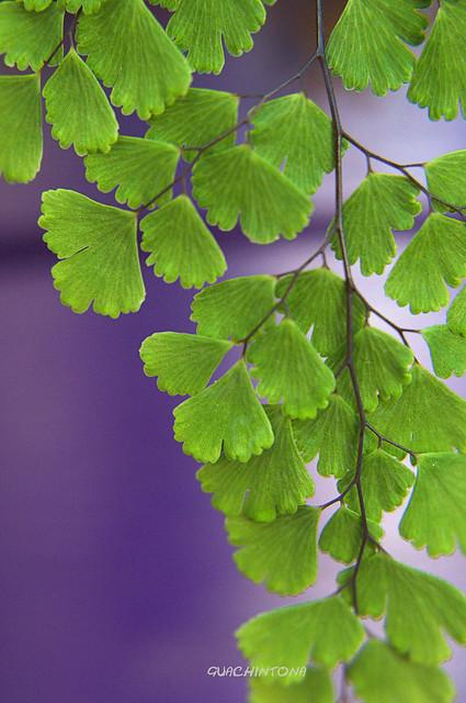 Morado y Verde