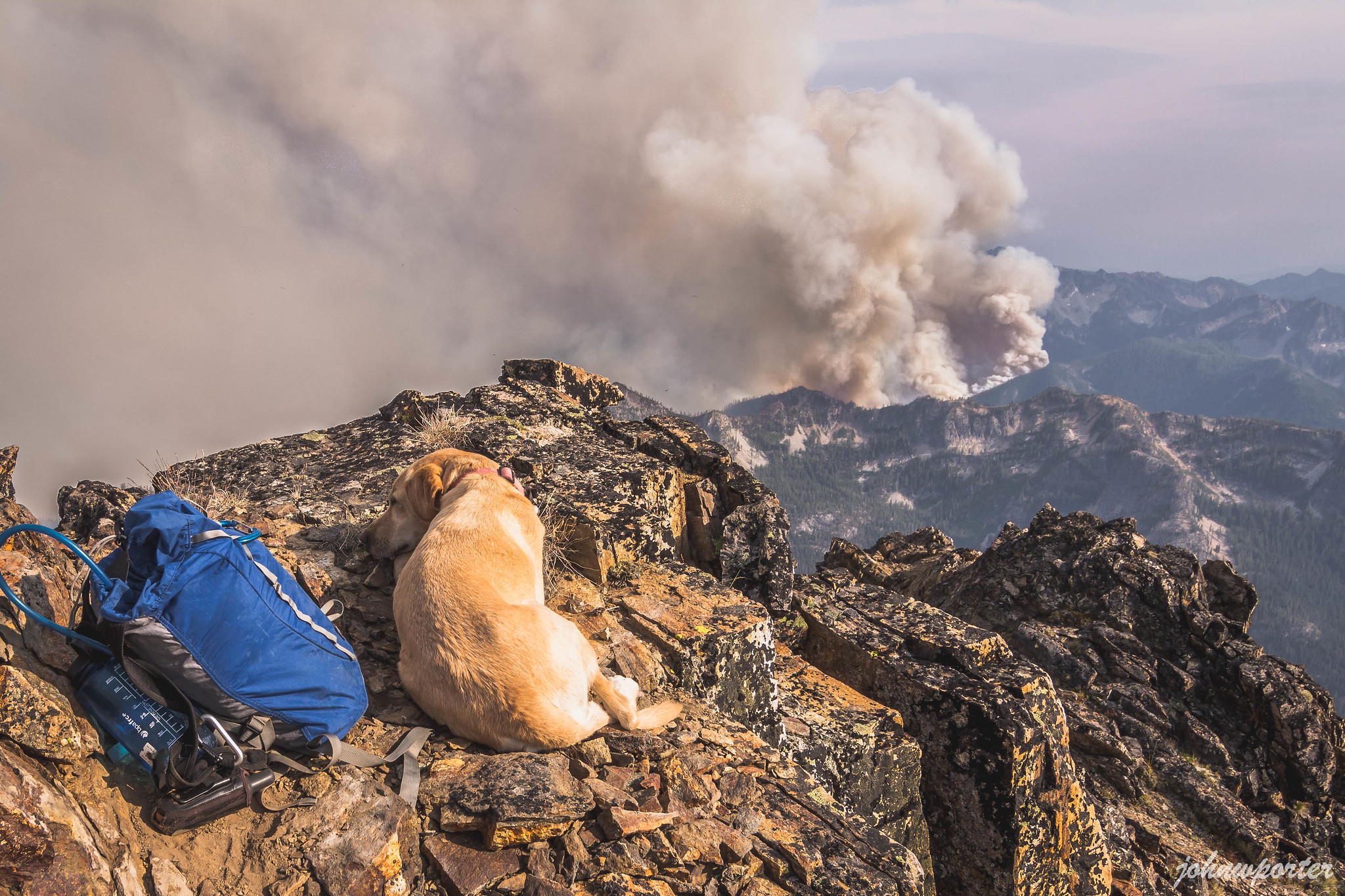 Summit dogs on Flora Mountain