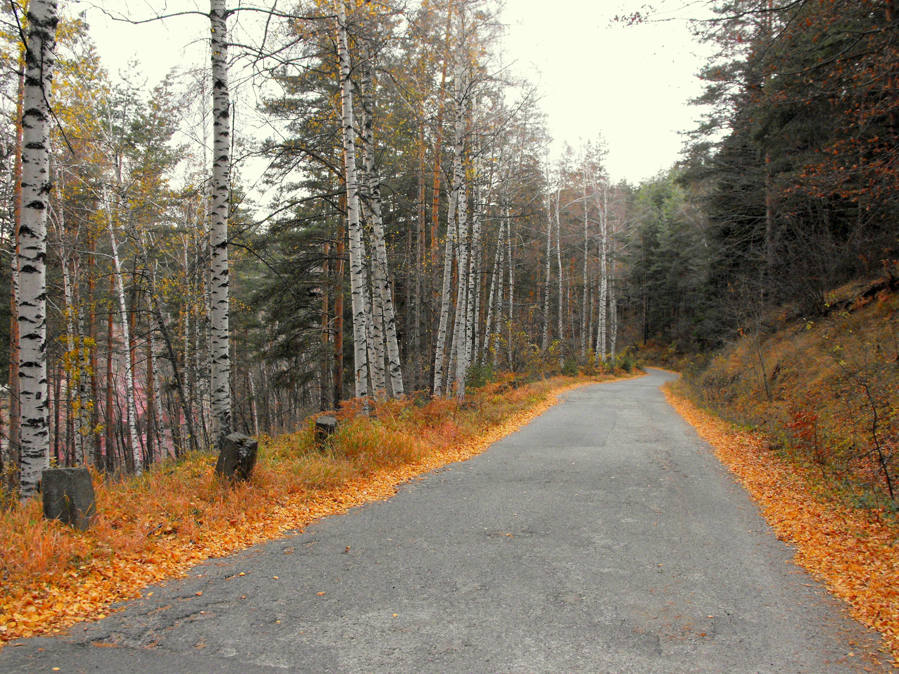 This road in Bulgaria has flame borders