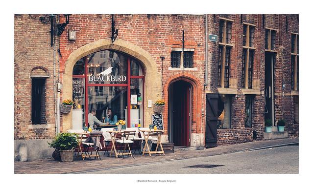 Blackbird Romance - Bruges, Belgium