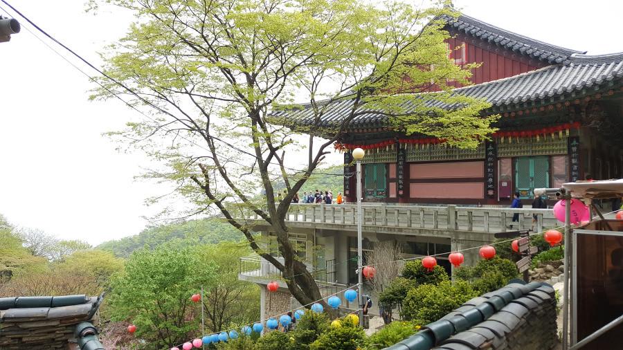 Nguyen, Anna; South Korea - Episode 14 (10)