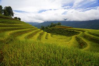 Terraced fields in Hoang Su Phi, Ha Giang, Vietnam. | by cuongvnd