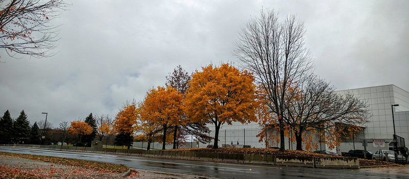 Fall colors at Paisley Park