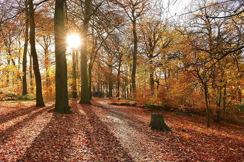 warleywoods robindemel autumn woods park birmingham