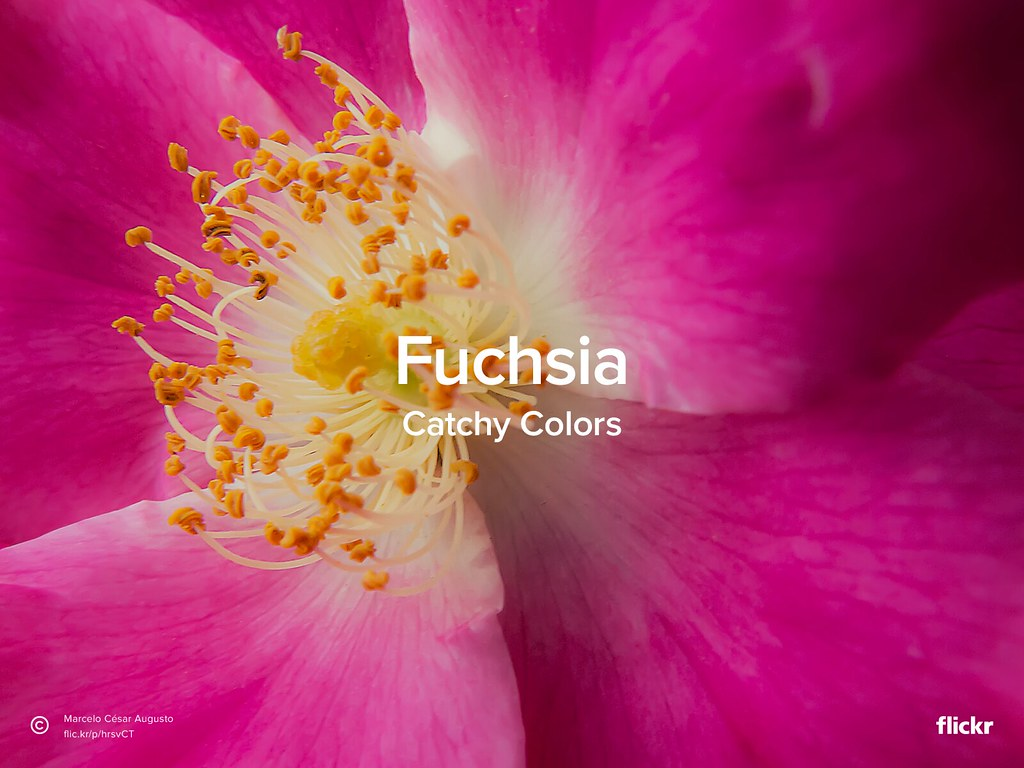 Catchy Colors: Fuchsia