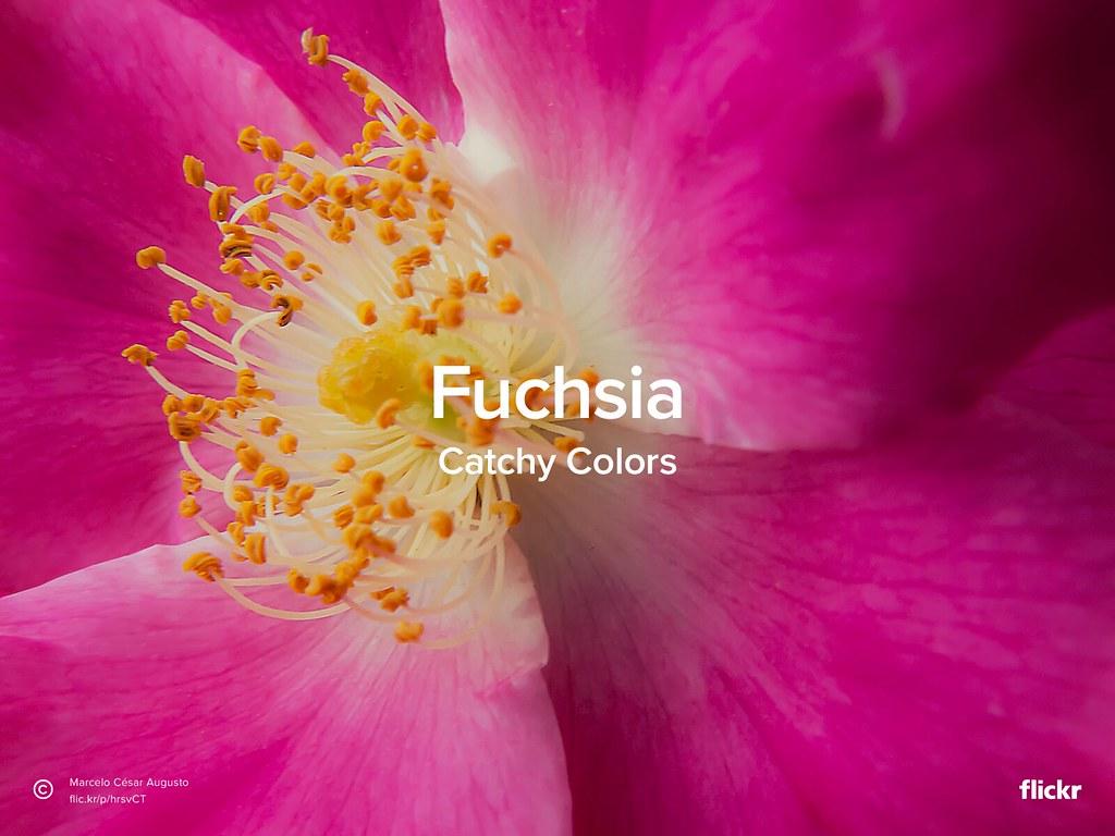 Catchy Colors: Fuchsia