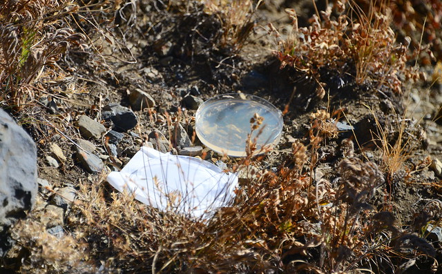 Spore trap for fungi and mycoviruses, Mineral King area of Sequoia National Park, California