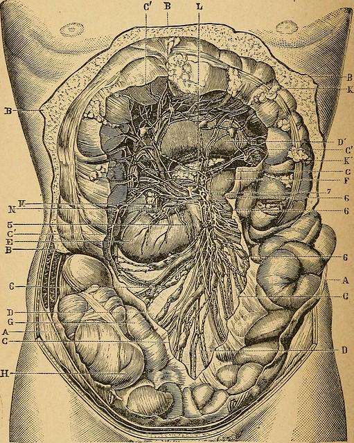 """Image from page 125 of """"Eléments d'anatomie et de physiologie génitale et obstétricale; précédes de la description sommaire du corps humain a l'usage des sages-femmes"""" (1894)"""