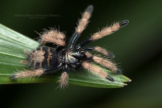 PA230024b | by Arachnida Moments