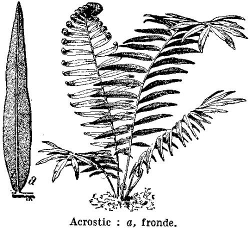 acrostic