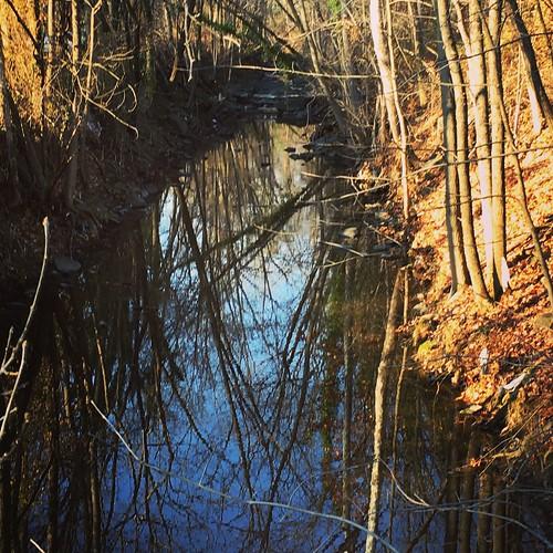 baltimore maryland neighborhood streams wintertrees reflections iphone 4winter cmwd