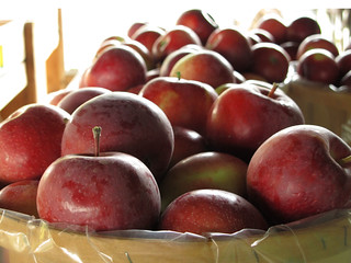 apples at Indian Ladder Farms   by rik-shaw 黄包车