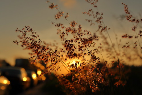 autumn sunset sky plants sun sunlight plant car sunshine silhouette 35mm canon bokeh outdoor taiwan sidewalk kaohsiung 夕陽 台灣 高雄 植物 天空 人行道 6d 剪影 黃昏 35l 戶外 散景 canon6d