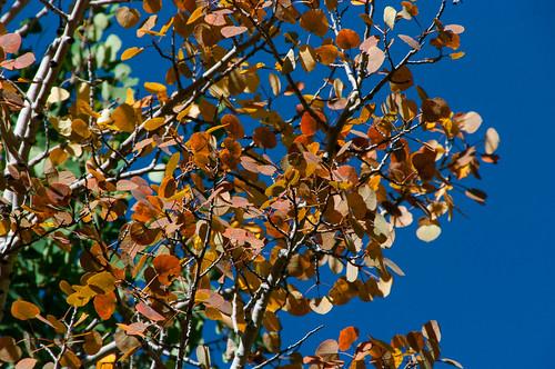 autumn arizona forest outdoors fallcolor unitedstates hiking nationalforest trail flagstaff sanfranciscopeaks coconinonationalforest forestservice sanfranciscomountain usfs aspenloop aspenlooptrail aspennatureloop flagstaffrangerdistrict aspenlooptrailno73 aspennaturetrail