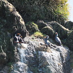 Mo, 02.11.15 - 12:39 - Pinguinera Islote de Piñihuil