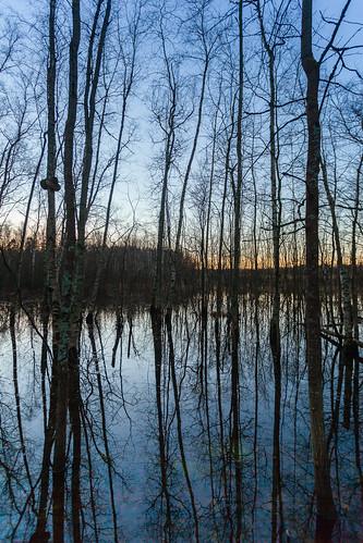 sunset sun lake tree silhouette forest espoo finland sundown puu metsä järvi auringonlasku aurinko uusimaa tulva pitkäjärvi