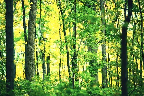 autumn fall grantsfarm missouri stlouis usa unitedstates unitedstatesofamerica tree trees fav10