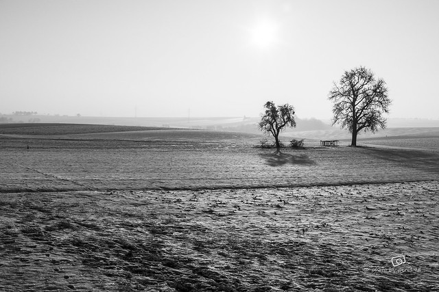 the two trees [explored]
