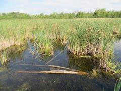 Parc-nature du Bois-de-l'Île-Bizard - Montréal,Québec