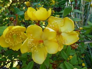 Yellow Flowers   by Mara 1