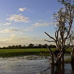 02 Viajefilos en Australia, Kakadu NP 101