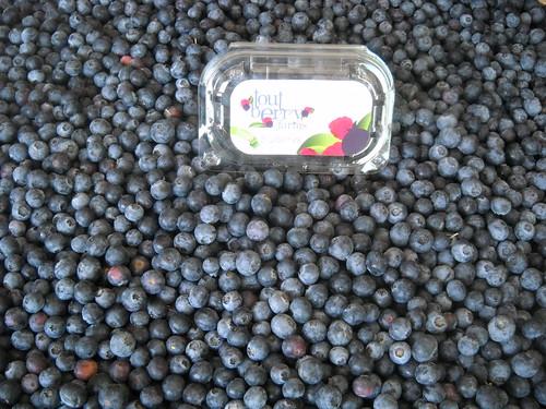 Blueberries everywhere aa Jun 1, 2015 (1) | by toutberryfarms