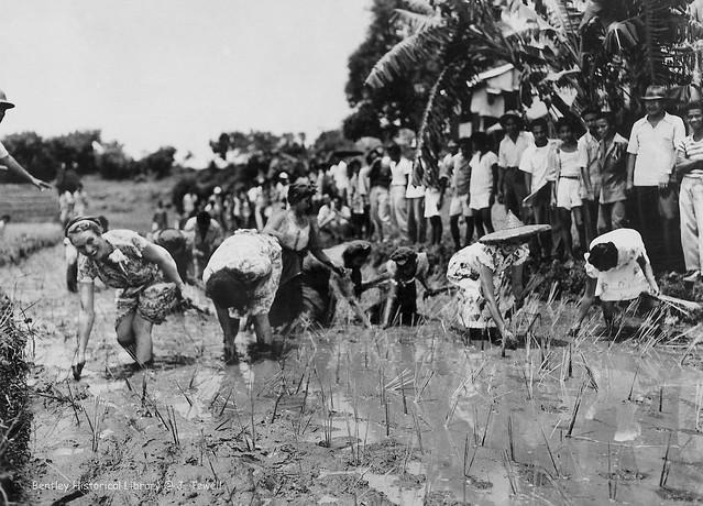Planting rice, Mandaluyong, Manila, Philippines, 1945-1950 a