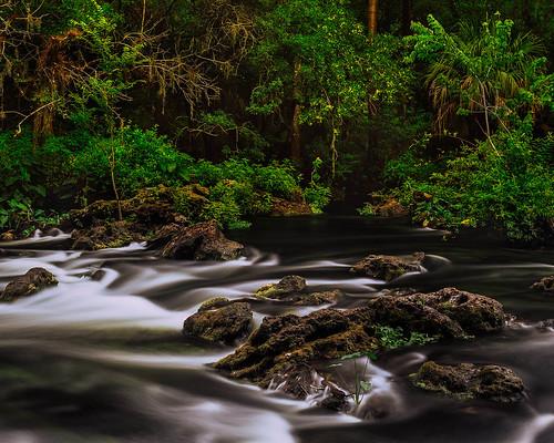 film tampa landscapes florida films fineart rapids velvia rivers 4x5 largeformat hillsboroughriver 2013 sironar ebonysv45ti rodenstock210mmf56aposironars jaspcphotography